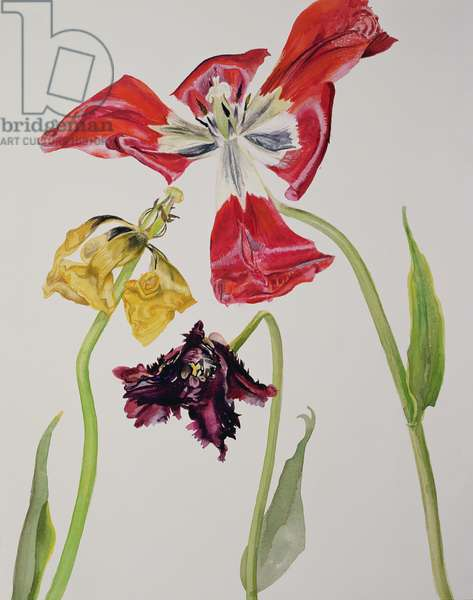 Still Life with Lillies (W/C on paper)