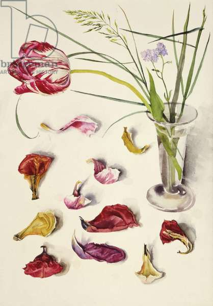 Still Life with Tulip (w/c on paper)