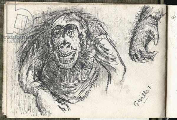 Gorilla, 1963 (pencil on paper)