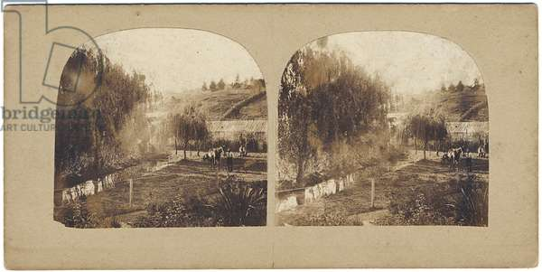 Captn. Stack's Garden (albumen print)