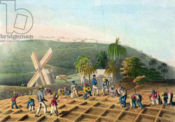 Planting the Sugar-Cane, pub. by Infant School Society Depository, London, c.1820 (etching, engraving and aquatint)