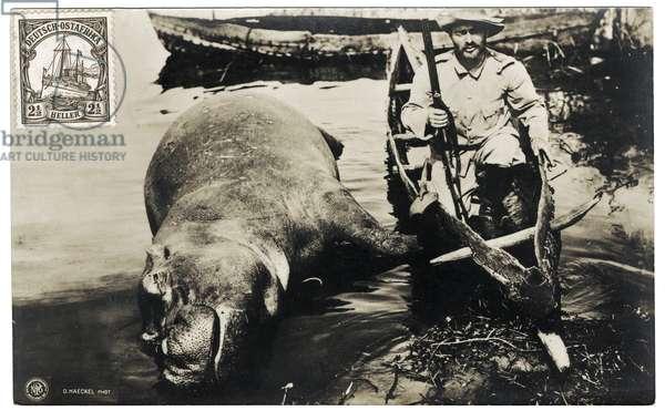 German hunter with hippo, German East Africa, c.1910 (b/w photo)