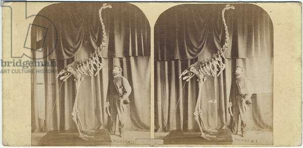 Julius von Haast and Moa, Canterbury Museum, c.1867 (albumen print)