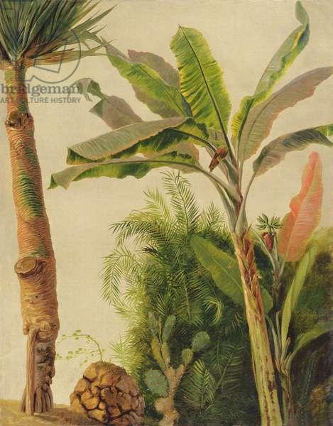 Banana Tree, c.1865 (oil on canvas laid on board)