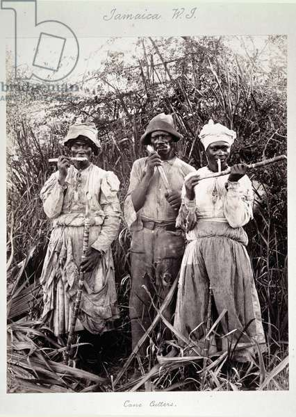 Cane Cutters in Jamaica, c.1880 (albumen print photo)