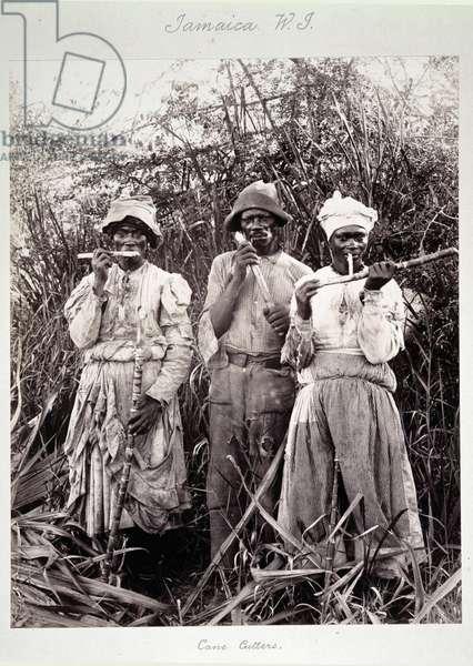Cane Cutters in Jamaica, c.1880 (albumen print photo)