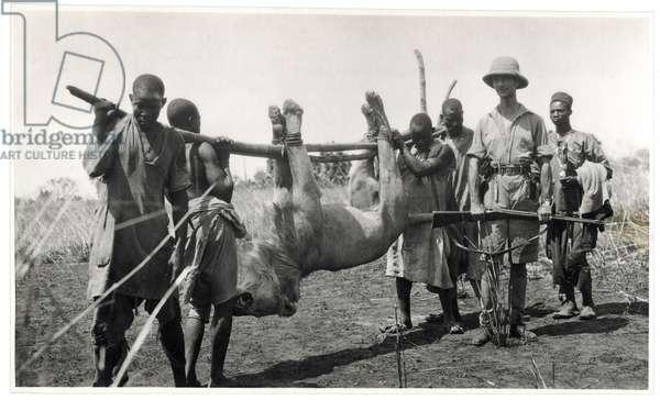 Lion at Bahr el Ghazal, Am Dafok, 1925 (gelatin silver print)