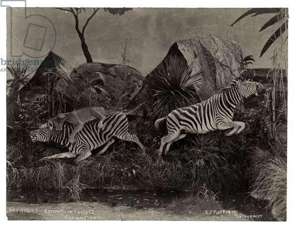 Diorama, c.1890 (gelatin silver print)