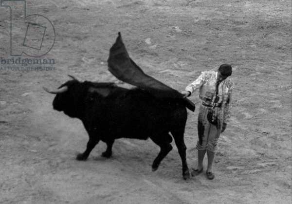 Matador Blasquez, wounded, resuming his faena, Palma, Spain, 1963 (b/w photo)