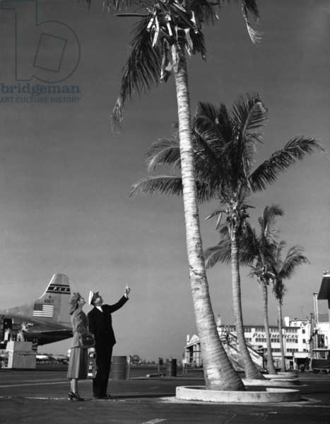 A Pan American pilot and flight attendant the edge of the tarmac at Miami International Airport, 1950 (b/w photo)