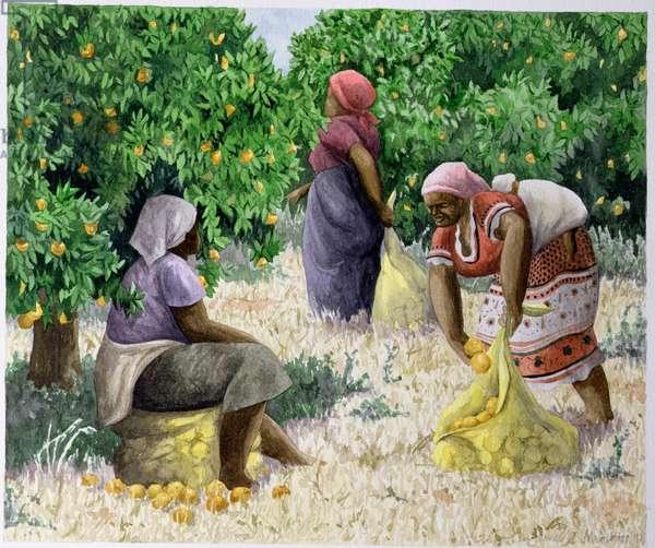 Citrus Fruit Pickers, 1997 (w/c on paper)