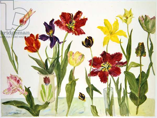 Parrot Tulips, 2004 (w/c on paper)