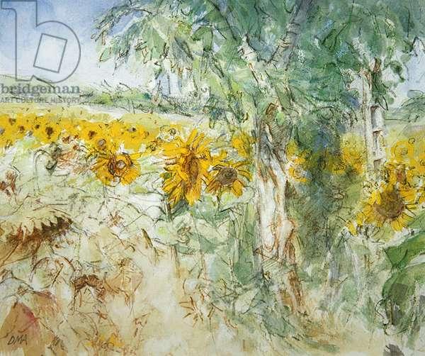 Sunflower field below St. Felix (w/c on paper)
