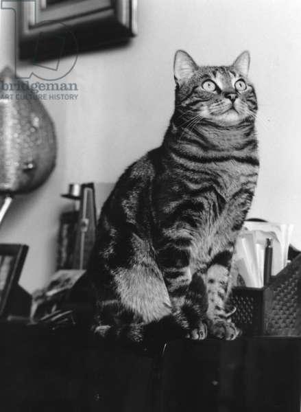 Cat (b/w photo)