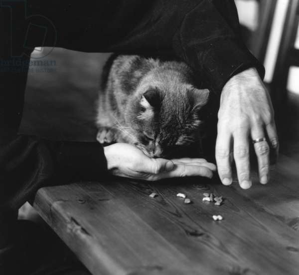 Eating in hand, cat (b/w photo)