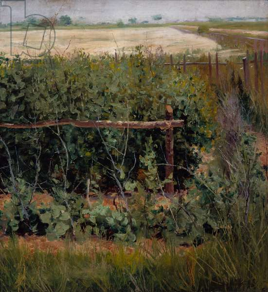 The Bean Patch, c.1880 (oil on canvas)