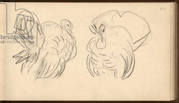 Two turkeys (pencil on paper)