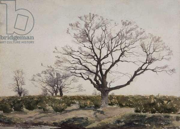 The Tree (w/c on paper)