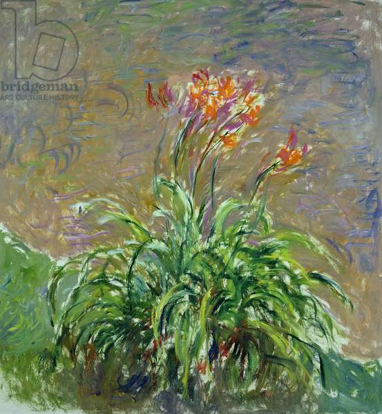 Hemerocallis, 1914-17 (oil on canvas)
