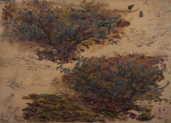 Study of trees (oil on panel)