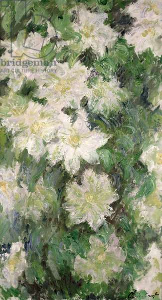 White Clematis, 1887 (oil on canvas)