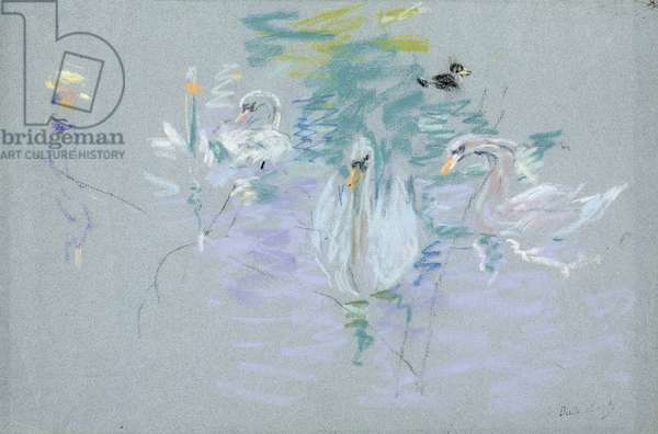 Swans, 1885 (pastel on paper)