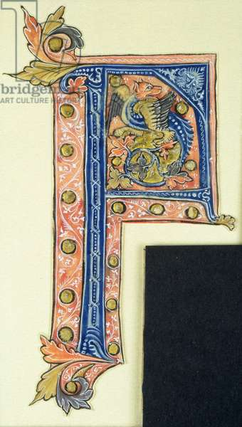 Historiated initial 'P' depicting a winged griffin (vellum)
