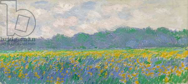 Field of Yellow Irises at Giverny, 1887 (oil on canvas)