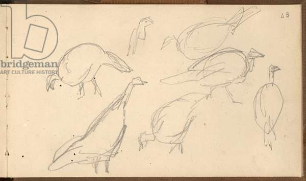 Turkeys (pencil on paper)