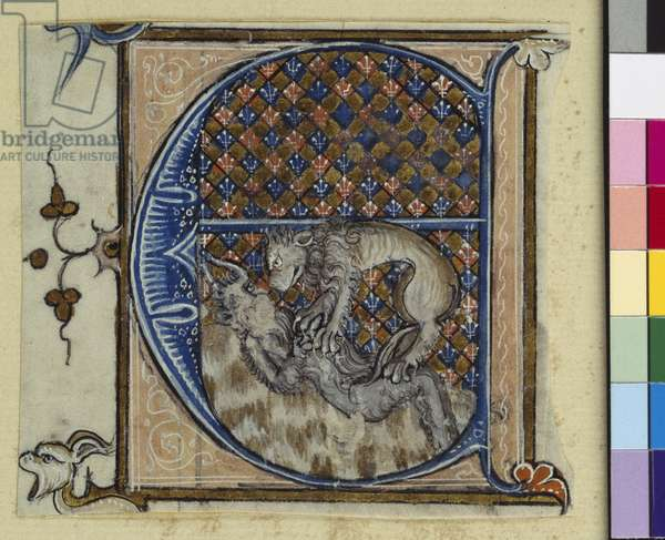 Historiated initial 'E' depicting a lion fighting a devil, c.1320-30 (vellum)