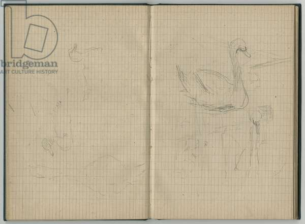 Swans and ducks, from a sketchbook, 1886 (pencil on paper)