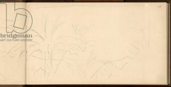 Study of palm trees, c.1884 (pencil on paper)