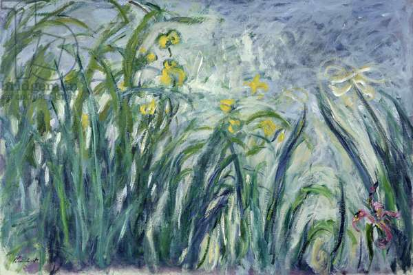 Yellow and Purple Irises, 1924-25 (see detail 414407) (oil on canvas)