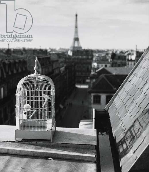 Rue de Vaugirard, Paris, 1931 (gelatin silver print)