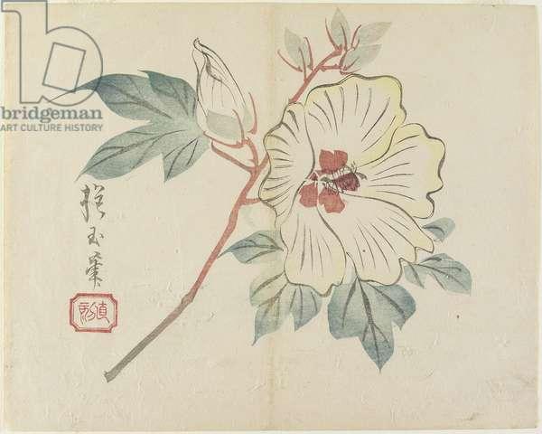 (Large White Flower), c. 1830