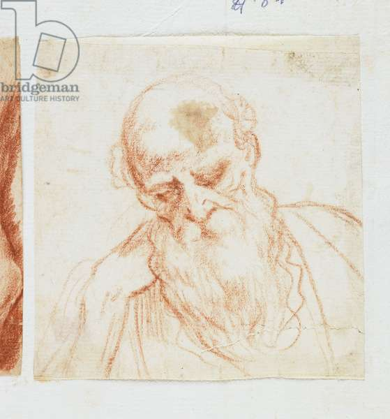 Head of a Bearded Man Looking Down (red chalk)