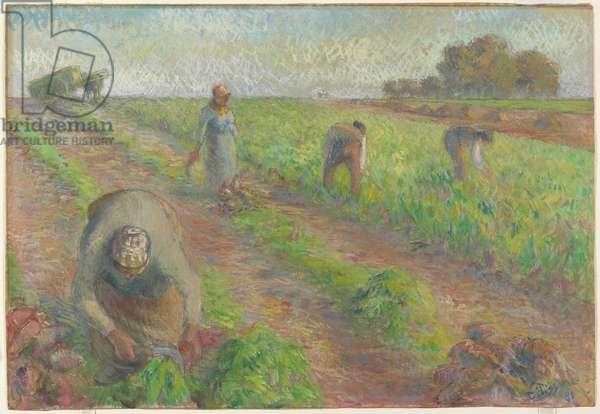The Beet Harvest (La Récolte des betteraves), 1881 (gouache over graphite on linen)
