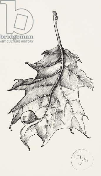 Leaf, 1976 (pen & ink)