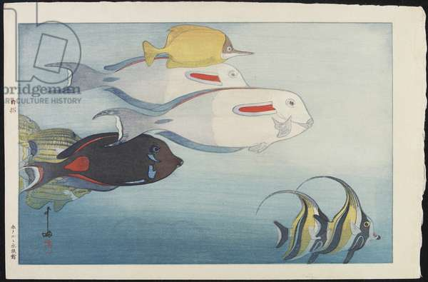 The Honolulu Aquarium, 1925