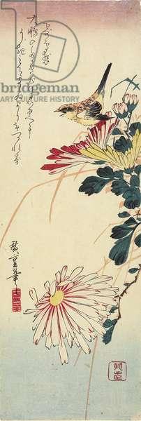 (Chrysanthemums and a Shrike), 1830-1858