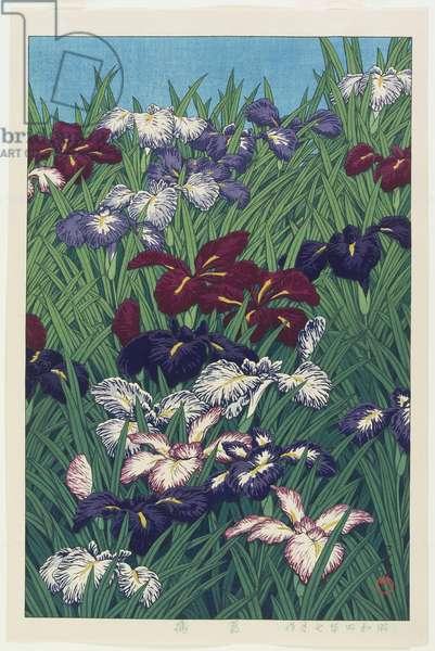 Iris, July 1929