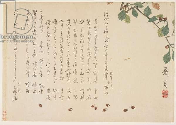 Oak branch and acorns (colour woodblock print)