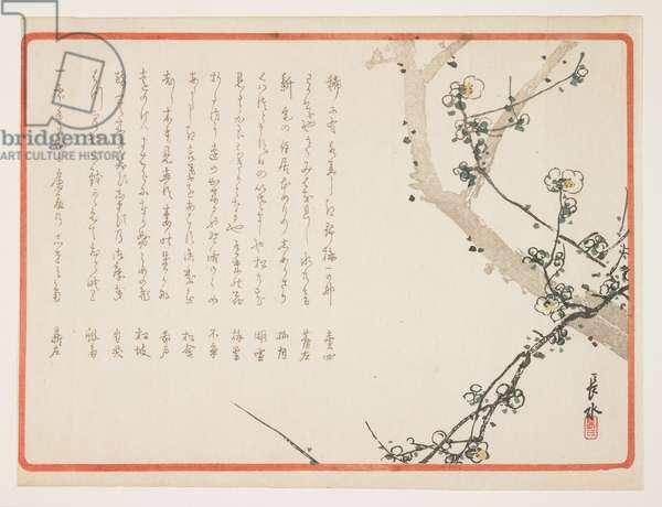 (Plum blossoms)