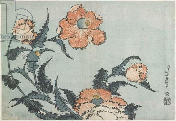 Poppies, c. 1832
