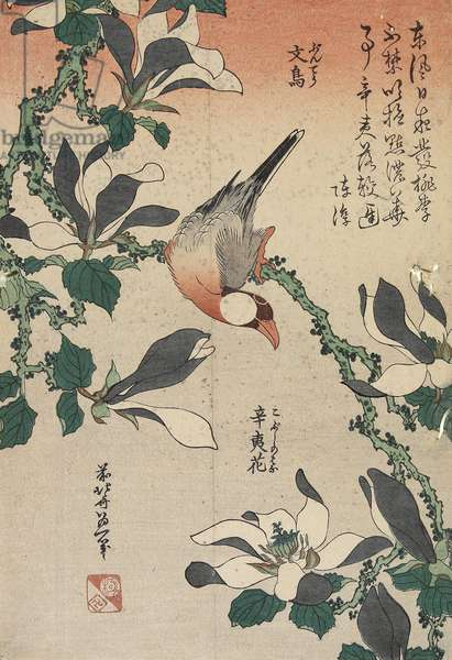 Java Sparrow and Magnolia, c. 1832