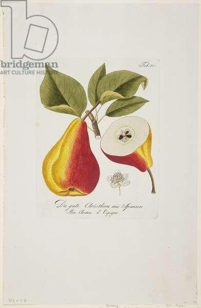 Die gute Christbirn aus Spanien from 'Pomona Austriaca, ou Arbres Fruitiers D'Autriche', 1787-96 (hand-coloured engraving)