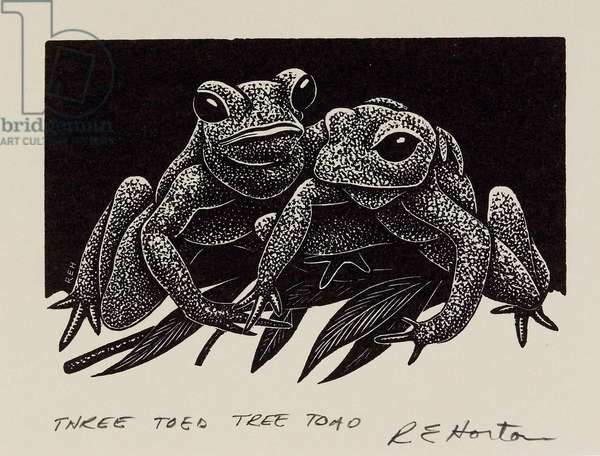 Three Toed Tree Toad, 20th century (wood engraving)