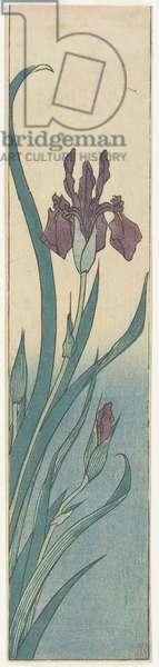 Iris, early 19th century