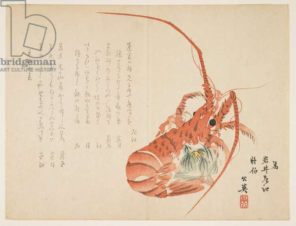 (Lobster and common hepatica), January 1862