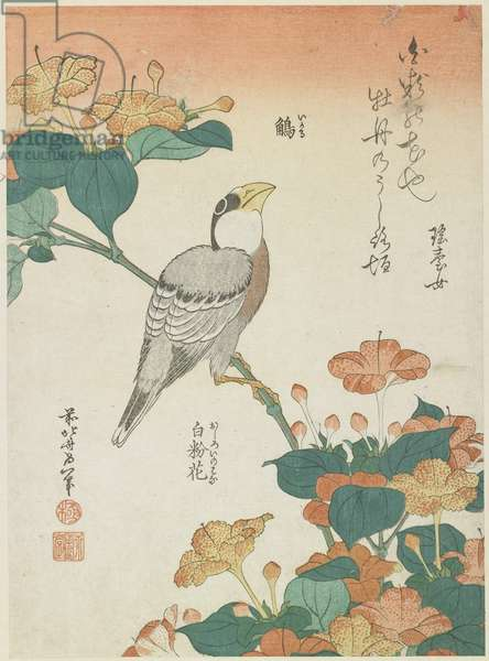 """Japanese Grosbeak and Four-o'cloks"", c. 1833"